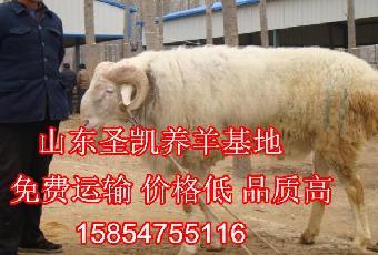 一头牛有多重鲁西黄牛牛犊的价格._志趣网