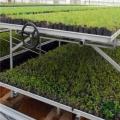 新型移动苗床养花育苗使用