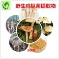 野生鸡枞菌提取物 野生天然三八姑粉 野生菌粉 VC