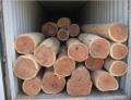 從黃埔進口南非玫瑰桉玫瑰檀木材需要哪些資料單證
