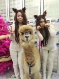 萌寵動物租賃商業活動萌寵動物展覽