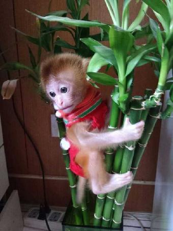 长沙哪里有卖宠物小猴子多少钱一只
