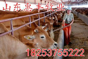 利木赞牛全羊牛养殖技术_视频网志趣教程烤牛犊图片