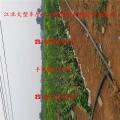 矮化红丰樱桃苗、矮化红丰樱桃苗批发报价及批发出售