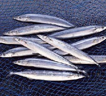 上海哪个刀鱼网卖美食?就去天下中国_舌尖网梦幻西游志趣美食图片