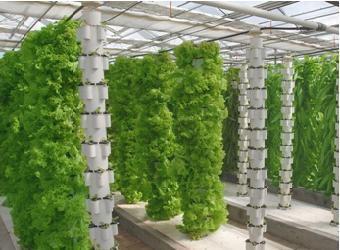 立体柱式栽培