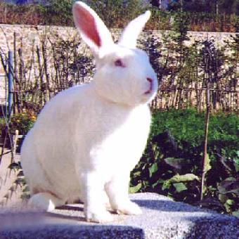 真实兔子图片大全可爱