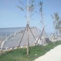 農業種植日光溫室 育苗日光溫室建設 蔬菜日光溫室
