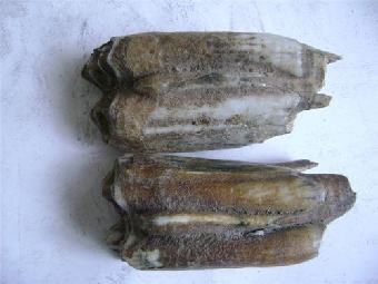 象牙 猛犸 化石/猛犸象牙化石应该怎么出手