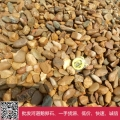 天津鵝卵石 小石頭鋪地 鋪路黃色石頭 魚池黃蠟石
