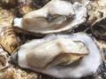 韶山生蚝批发店,生蚝基地自产自销, 鲜活生蚝市场价格多少钱