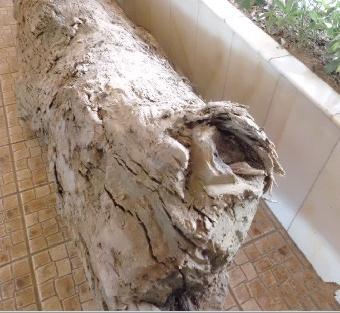 假的金丝楠木没有香气,有些有香气,但是有一股樟脑气味,比较刺鼻.