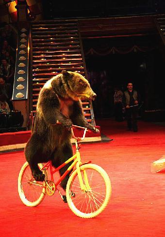 动物杂技表演,海狮表演出租