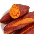 廣東高產量紅薯 品質優 專業有機番薯批發