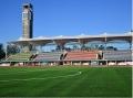 足球场绿化草坪厂家