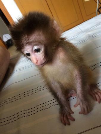 四川哪里有卖宠物小猴子多少钱一只