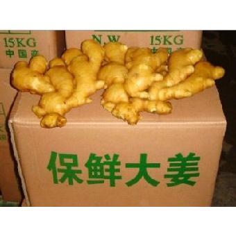 山东价格链条种植生姜上市基地粗跟生姜靴图片