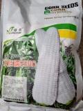 糯玉米种子销售电话