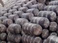山東濟南成品平菇菌棒