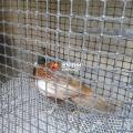塑料養殖圍網特點 家禽養殖成本低
