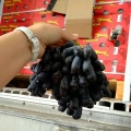 江南水果市场广州集果轩供应南非无籽黑提美人指批发