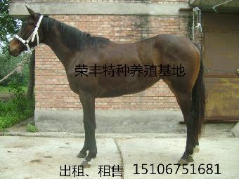 蒙古小马可爱画法