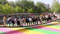 网红摇摆桥一年四季受欢迎