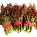 2019年红香椿苗价格,红香椿苗价格