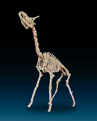 上海爬行动物化石权威鉴定机构