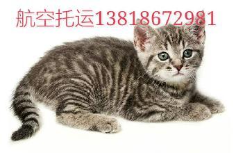 浦东机场南方航空宠物托运