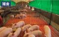 供应广西梧州养殖场手动升降帘 鸡场羊舍卷帘布加工