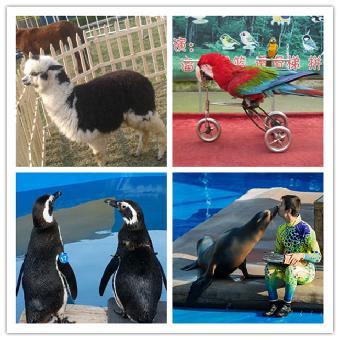 马戏团动物表演动图