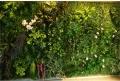北京卖背景墙植物墙厂家