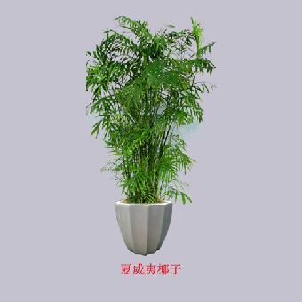 安定门花卉绿植服务公司