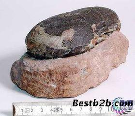 法国恐龙蛋化石_恐龙蛋化石价格  恐龙蛋化石 鉴定