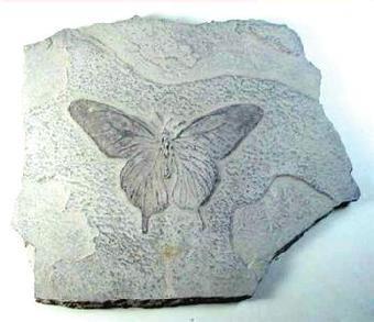 上海/关键字:猛犸象牙化石收购猛犸象牙化石交易猛犸象牙化石鉴定