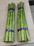綠寶石蘆筍種子