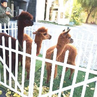 动物出租展览