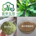 食葉草提取物粉10:1蛋白草提取物粉