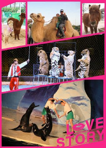 动物马戏团表演,出租老虎狮子大象