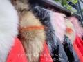 杭州品牌高含绒量大码歌洛菲羽绒服批发