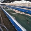 帆布魚池定做 帆布水池加工 帆布蝦池生產