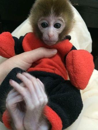 哪里有宠物猴子卖?多少钱一只?
