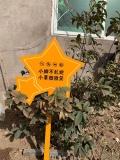 星星造型花草牌