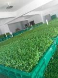 舉辦芽苗菜種植培訓班益康園芽苗菜