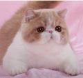 惠州哪里有卖加菲猫,什么地方有卖加菲猫