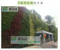 苏州植物墙用哪些绿植