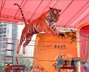 马戏团动物表演出租