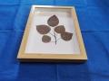 植物標本框中空立體相框框內高2cm蝴蝶標本盒