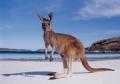 澳大利亞,新西蘭簽證是材料交電調簽證